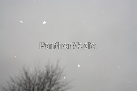 snowflake, abstract - 19466680