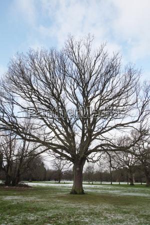 oak tree growing in field