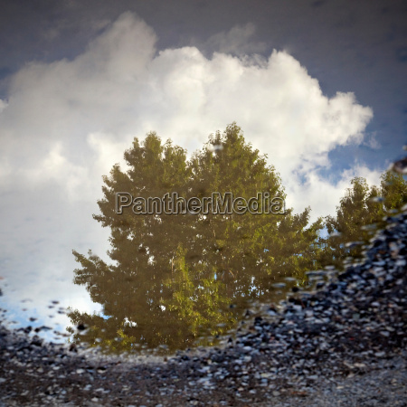 reflection of tree and sky in