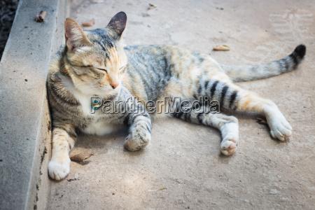 katze schlaeft auf dem boden liegend