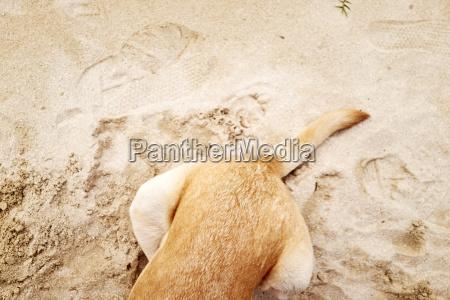 teilweise verdunkelter hund auf sand