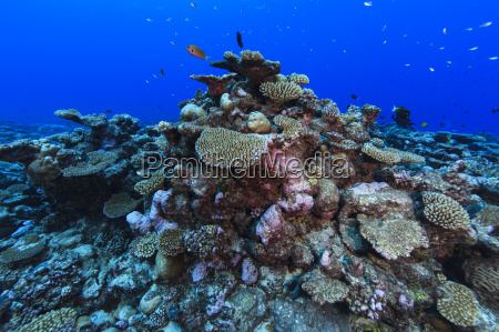 underwater view of coral reef at