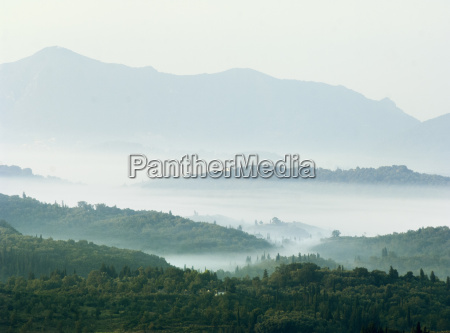 cypress trees in misty valley at