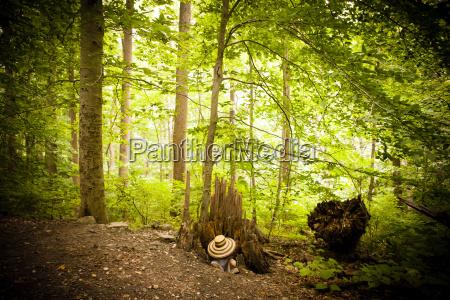 mid adult woman hiding underneath hat