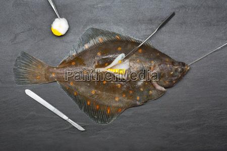 frischer fisch chirurgisch mit mais gefuellt