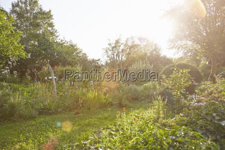 kraeutergarten im sonnenlicht