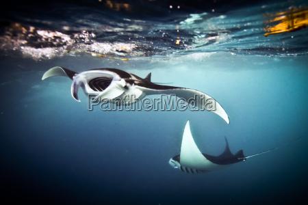 wissenschaft tier indonesien fisch freiheit ungebundenheit