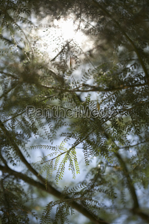 close up of tree branches