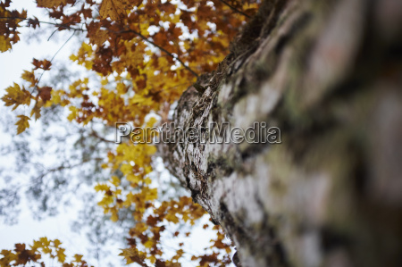 low angle view of tree with