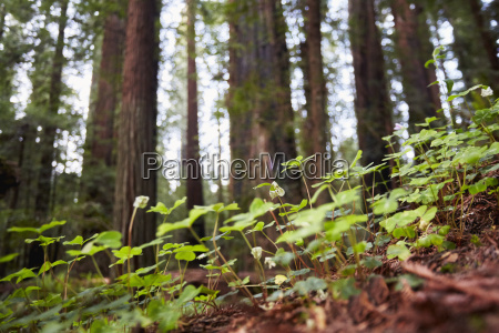 wild flowers humboldt redwoods state park