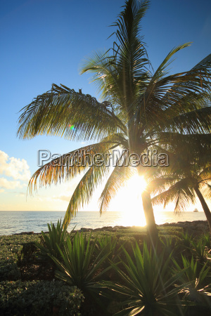 view of palm trees and coast