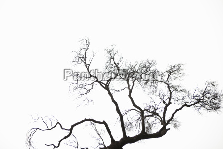 silhouette of bare tree branches