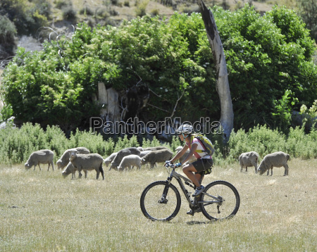mid adult woman cycling in field