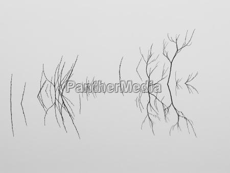 limbs across serene lake water washington