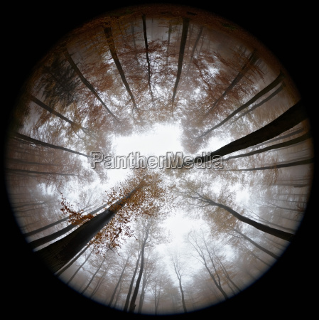 fisheye view of autumn forest in