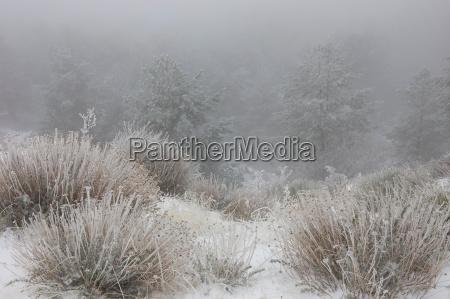 schneebedeckte pflanzen im feld