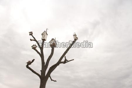 birdhouses on tree against overcast sky