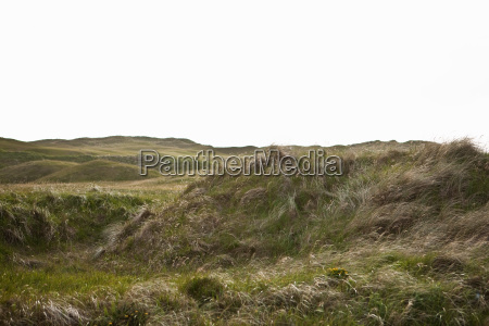 hills and long grass