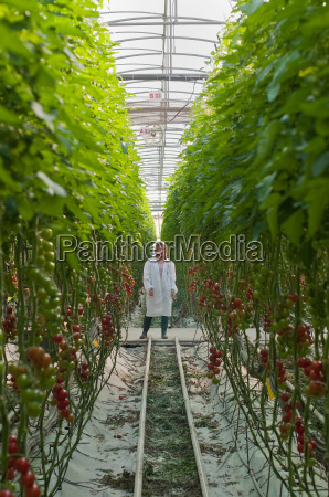 arbeiter zwischen hohen pflanzreihen