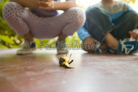 two children looking at dead bird