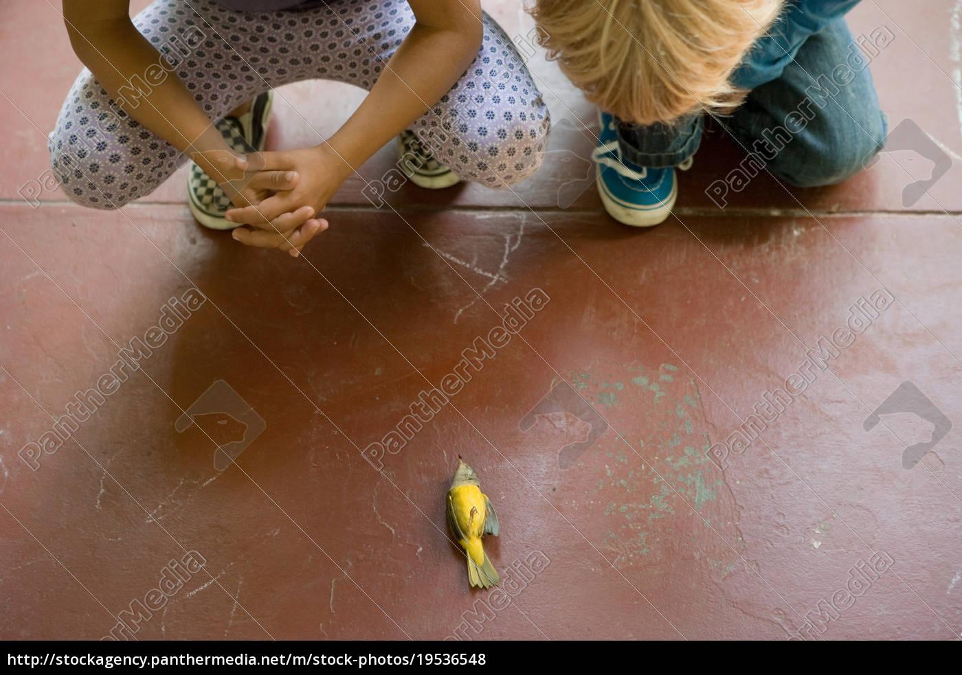 zwei, kinder, die, toten, vogel, anschauen - 19536548