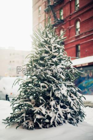 winter ast zweig outdoor freiluft freiluftaktivitaet