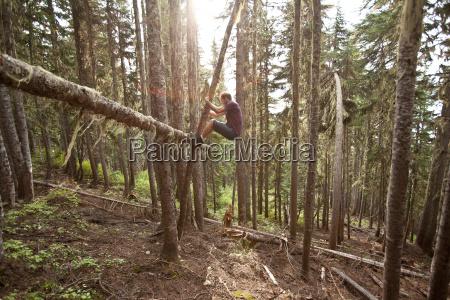 man climbing a tree garibaldi provincial