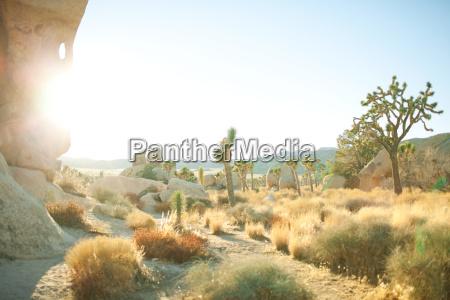 joshua tree national park california usa