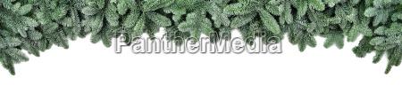 breite borduere fuer weihnachten frische tannenzweige