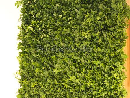 live plants wall