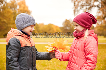 little boy giving autumn maple leaves