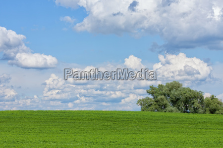 beautiful green field with white clouds