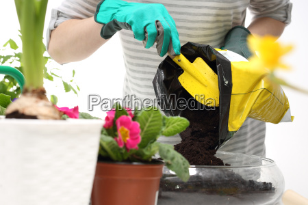 land for flowers transplanting plants