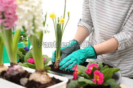 planting of plants floral composition