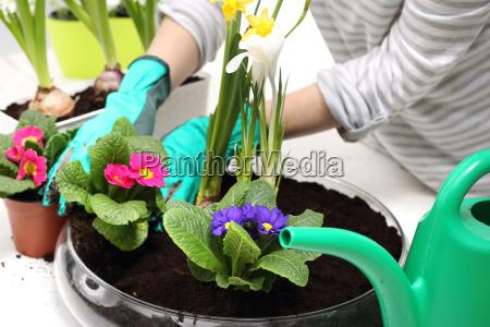 planting flowers planting flowers flower arrangement