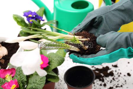 pflanzen pflanzen blumen arrangement