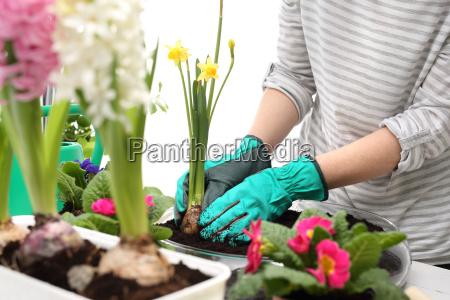 pflanzen, pflanzen, blumen-arrangement - 19679837