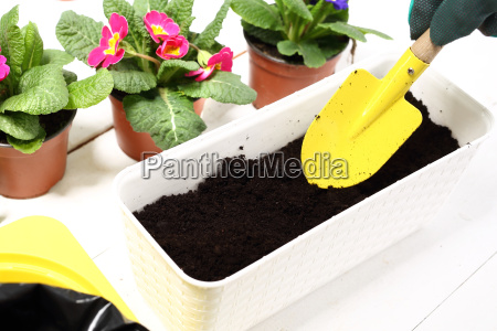 land for flowerstransplanting plants