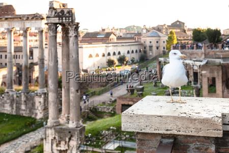 urban moewe und ruinen des forum
