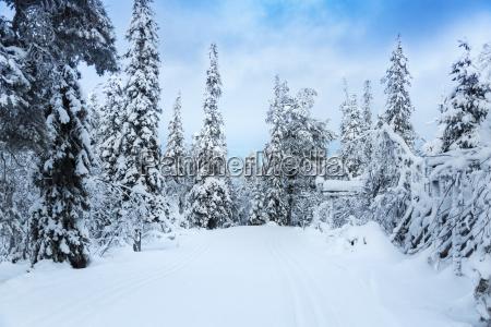 beautiful snowy forest landscape in finland