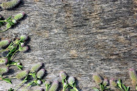 dekoration mit gras trockene blumen auf