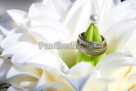 wedding rings in bright bouquet