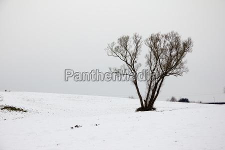 baum in winterlandschaft mit viel schnee
