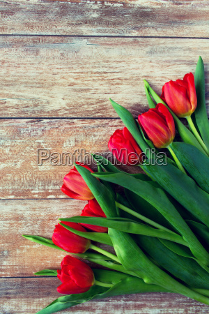 close up of red tulips on