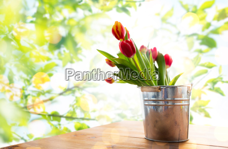 close up of tulip flowers in