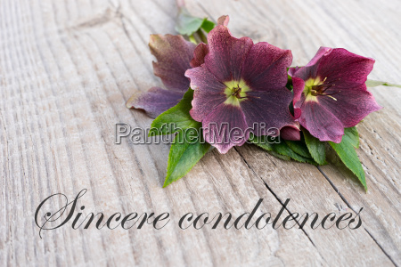 english mourning card with purple hellebores