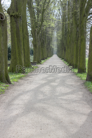 sandpath with old lime trees in