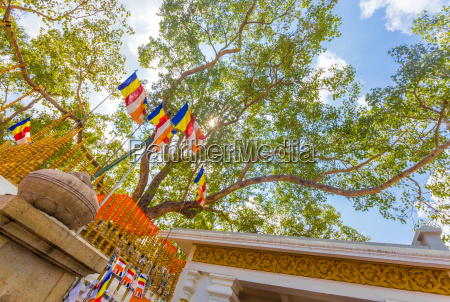 fahrt reisen tempel beruehmt baum tourismus