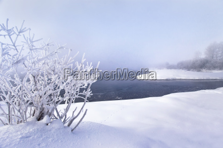 winter landscape trees and bushes with