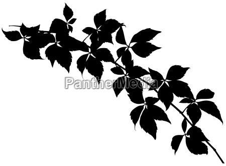 leafy branch silhouette